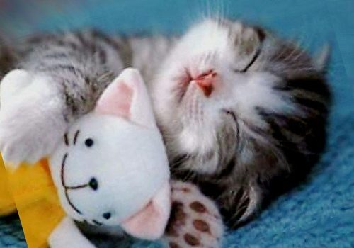 L'atteggiamento mentale nella difesa personale, ovvero impariamo dai gattini!
